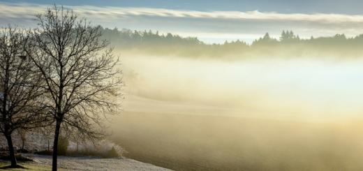 Dividenden-Schätzungen Stochern im Nebel Header